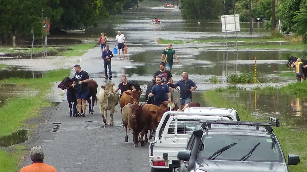 Wingham NSW March 2021 Floods, Liz Jarvis, feature story by Brilliant-Online