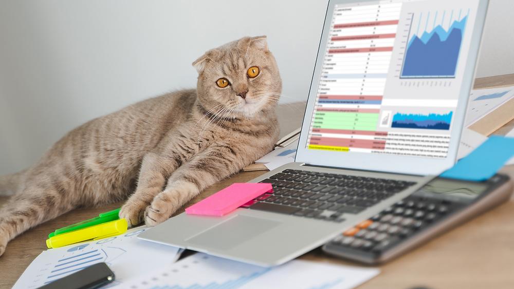 CATS4TAX, Tax Tips, Lyndall Ward