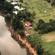 Accomplished Tree Management on the Mechanics of Tree Hazards