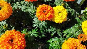 Greenbourne Nursery on using Spring Colours to Brighten Your Soul