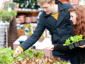 Vegetable growing tricks and tips from Greenbourne Nursery