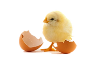 chick2.png