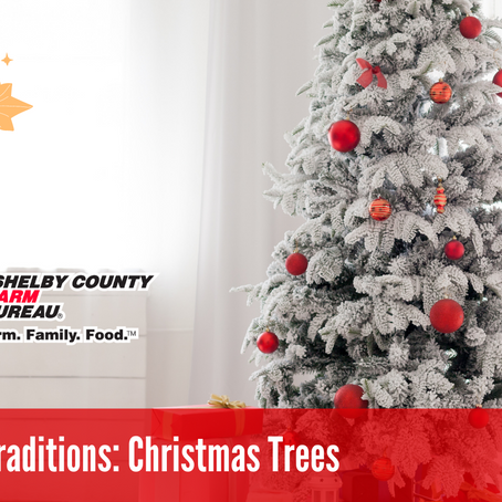 Holiday Traditions: Christmas Trees