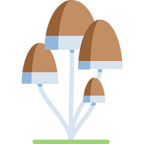008-fungi.png