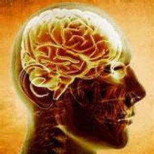 C59 Understanding The Addicted Brain | 10 hour
