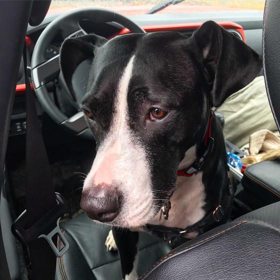 Travels With Lucy: Van to Cran