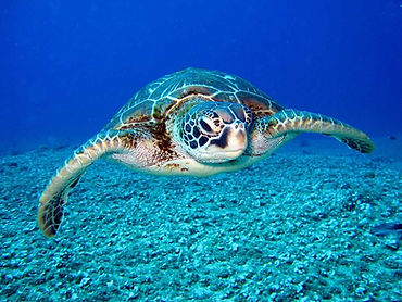photo-of-hawksbill-sea-turtle-1618606.jp