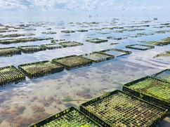 Oyster Farm.jpg