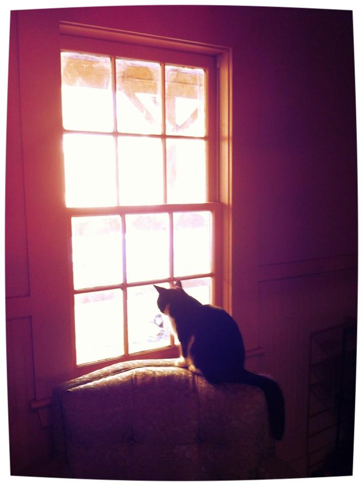 Cat in Window.JPG