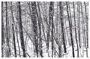 Winter Woods.jpg