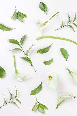 HIO Homeopathy - Events
