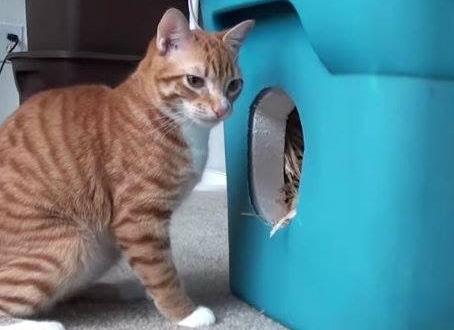 Brr! Brr! Meow!