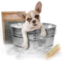 Mobile dog grooming and spa services, Columbus OH