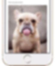 client portal furball fitness pet care