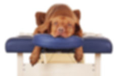 massage therapy services for dogs, central ohio