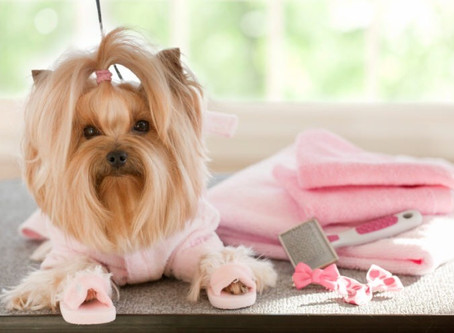 New Services: Furball Fitness is now offering Grooming, Dog Obedience, and Puppy Training
