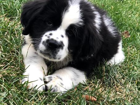 5 Tips: How Do I Potty Train My Puppy?