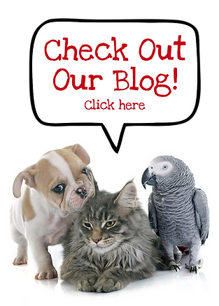 Articles about pet care and local events Central Ohio