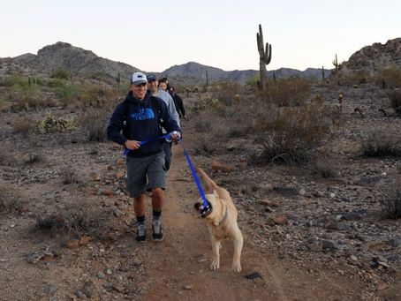 Hiking With Your Dog: Safety And Comfort Tips