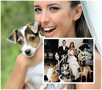 Pet Wedding Sitter Columbus OH
