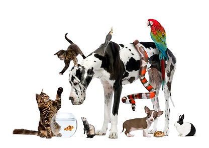 Pet Sitters Pickerington Ohio