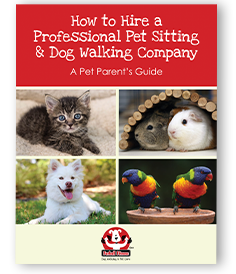 How to Hire a Professional Pet Sitting & Dog Walking Company: A Pet Parent's Guide