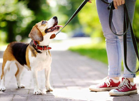 Who is going to walk the dog?