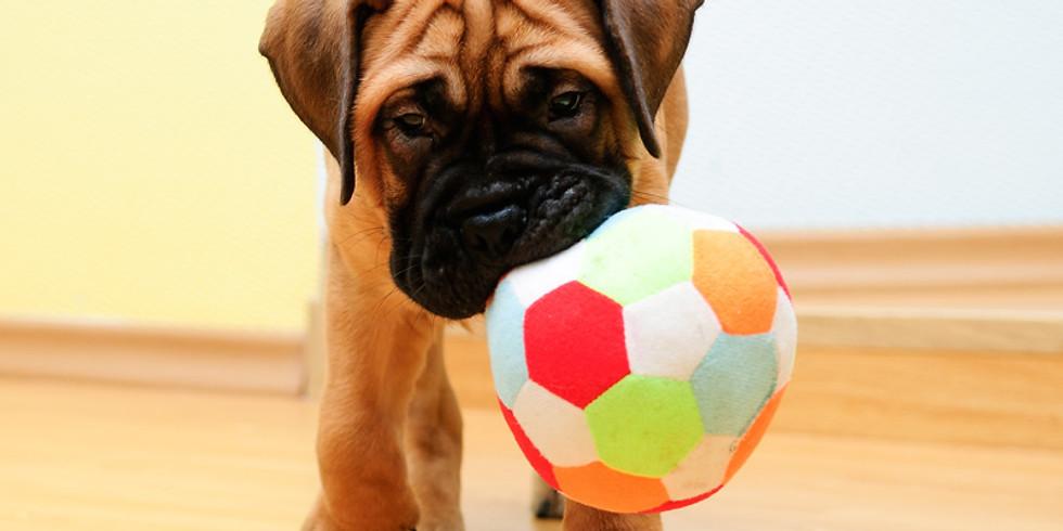 6 Week Puppy Training Class (1)