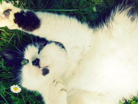 We've Been Completely Wrong About How Cats Get Their Black-And-White Spots