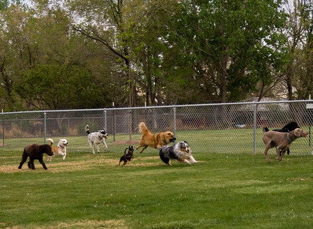 Born to Run: Dog Parks in Columbus