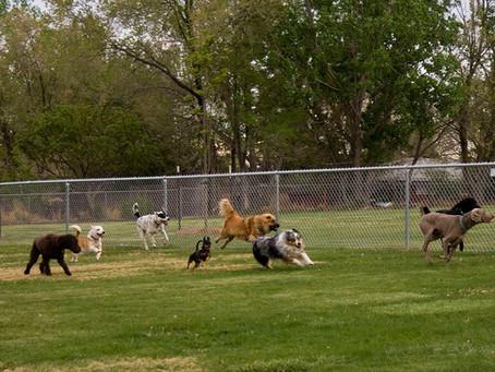 Born to Run: Dog Parks in Columbus
