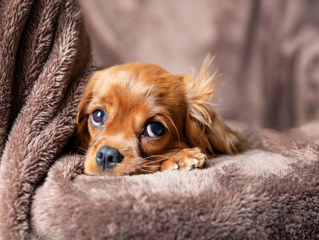 5 Tips for Naturally Reducing Stress in Dogs