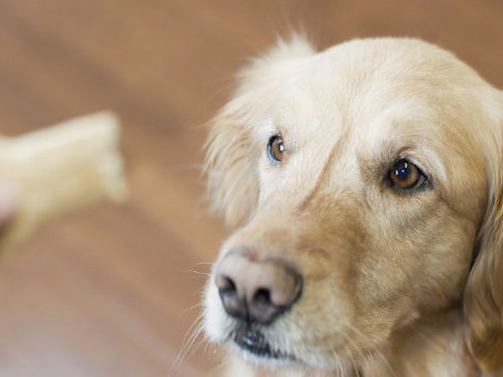 A More Positive Approach to Dog Training