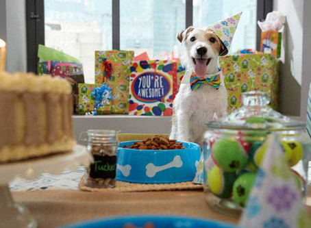 Book Your Next Pup's Birthday Party at Furball Fitness!
