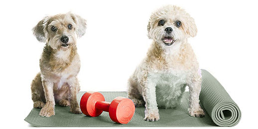 pet care in oh