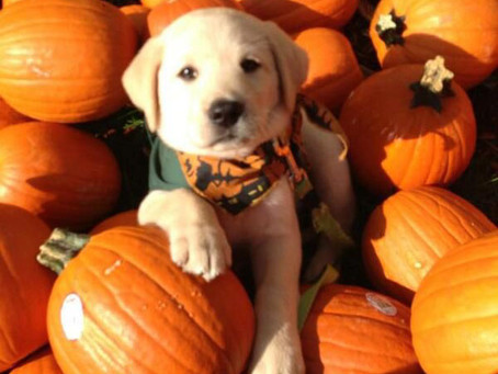 10 Safety Tips for Your Pet's Halloween