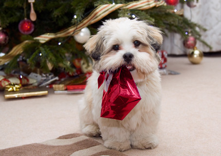 Tips to keep your fur baby safe over the holiday season.