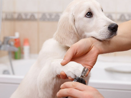 Dog Grooming Tips & Tricks: Maintaining Your Dogs Hygiene at Home