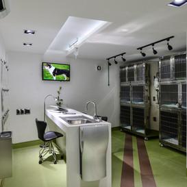 Cliníca Veterinária