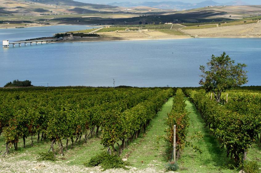 Zabu wijnvelden