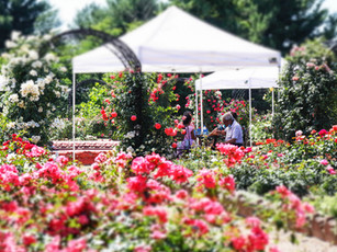 Rose, Sweet, Rose: Garden Bliss Bridges Communities