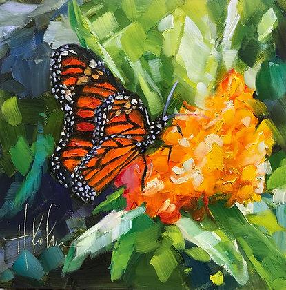 Monarch on Butterfly Plant II
