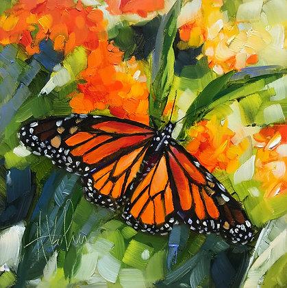 Monarch on Butterfly Plant III
