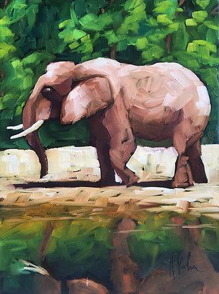 Elephant Reflecting