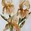 Thumbnail: Golden Irises