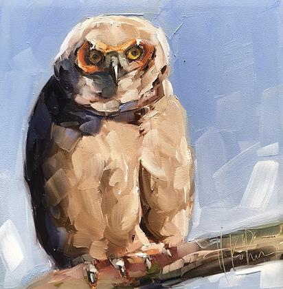 Great-Horned Owlet III