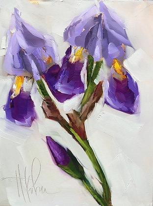 Iris Study, gold foil