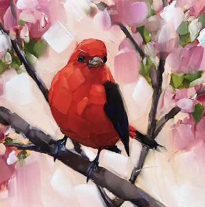 Scarlet Tanager, Blush