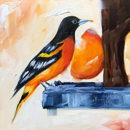 Oriole & Orange