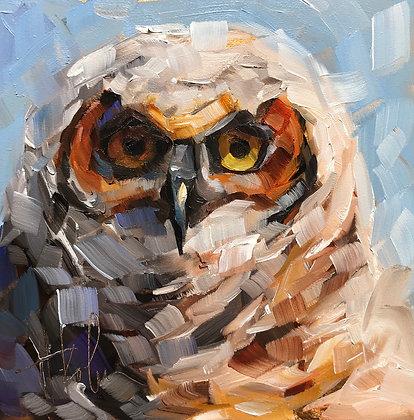 Owlet, Great-horned